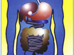 disegno intestino