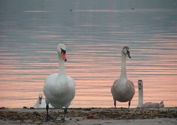 Gli abitanti del Lago
