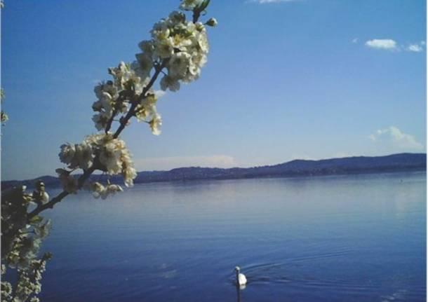 Primavera al lago
