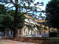 albero piazza mazzini municipio tradate