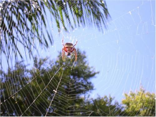 Un ragno velenoso