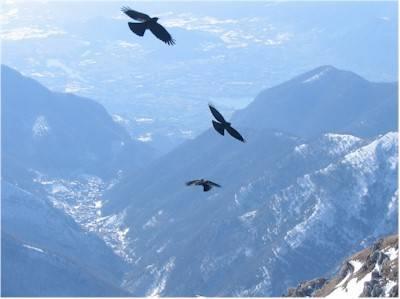 Volo di uccelli