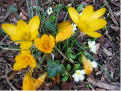 Fiori di primavera nel giardino