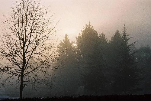 Nebbia al golf club