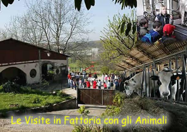 Una domenica di lezione in fattoria for Porte francesi della fattoria