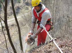 taglio bosco