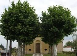 alberi monumentali cassano magnago natura ambiente ecologia