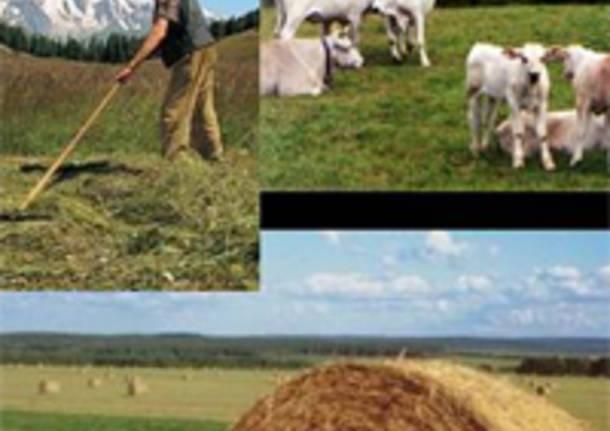 Roma - Coronavirus: Cia, via alle domande per contributi a fondo perduto ad aziende agricole - - Varese News