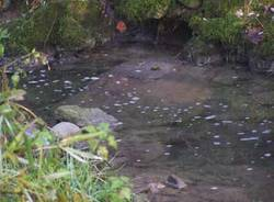 Inquinamento fiume Rugia Nuova - Valle della Fornace