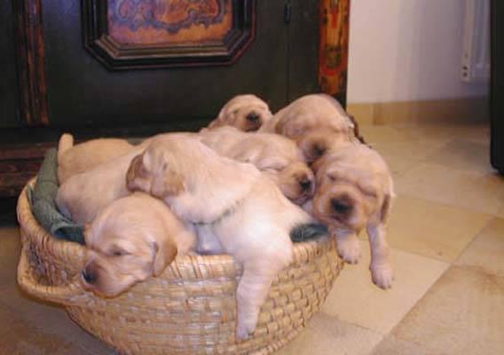 cuccioli adottare cani
