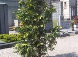 alberi abbattuti cimitero busto arsizio aprile 2007