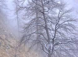 Cai Gallarate escursione neve