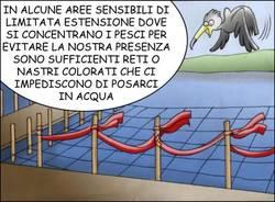 Cormorani 11