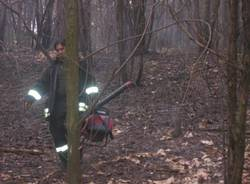 incendio bosco vigili fuoco parco pineta