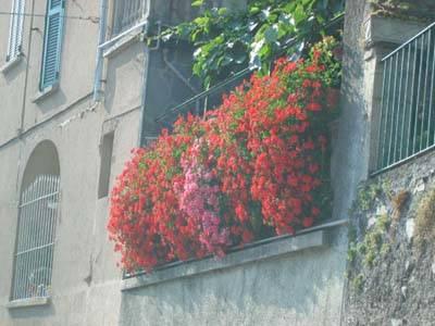 Balcone in fiore