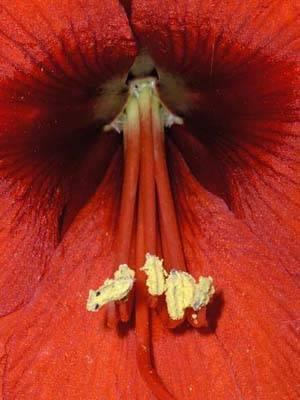 Dentro un fiore