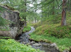 Ruscello nella foresta incantata