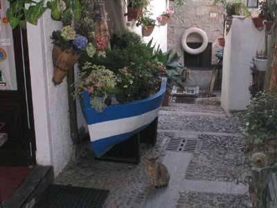 gatto pensatore