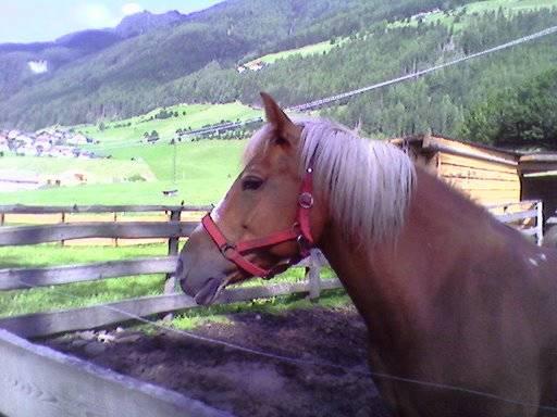 Cavallo altoatesino