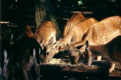 Poveri animali....