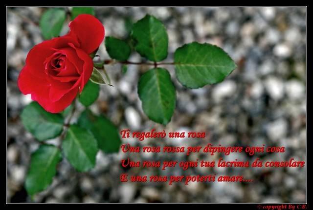 Ti regalerò una rosa....