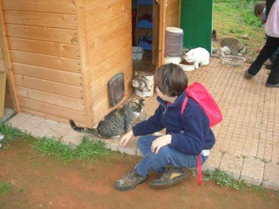gatti casermone gallarate