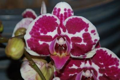 vivaio floralpe cassano valcuvia