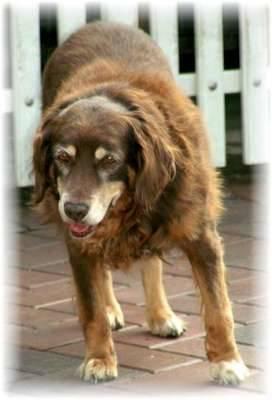 adozioni cani rifiugio elia busto apar animali saky