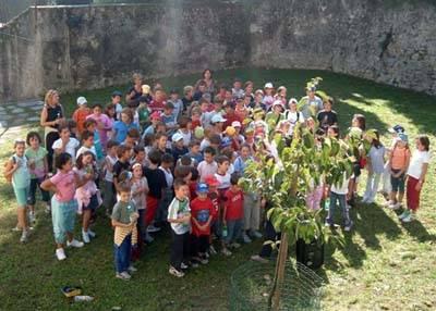 kaki tree project 2005