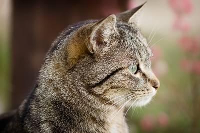 Attenzione: ho visto un topo!