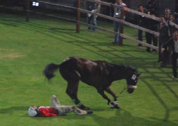 balosso cavallo ucciso palio legnano 2008