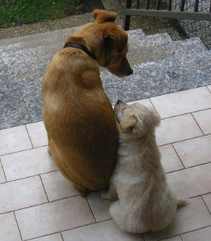 Lilly e Luna