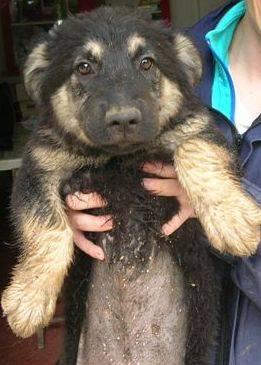 Piccole cucciole crescono...ADOTTATELE prima che crescano!