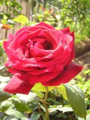Un fiore per la mia mamma