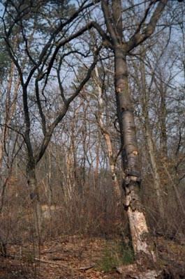 bosco ticino malpensa cascina tre pini