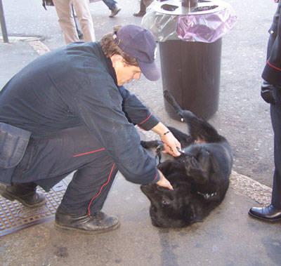 cane dick carabinieri