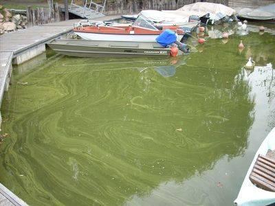 foto lago varese inquinamento