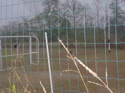 uccelli morti sant'anna busto arsizio 29-10-2008