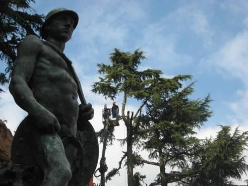 cedri abbattimento piazza repubblica