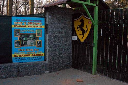trasferimento tigri dog's ground somma lombardo
