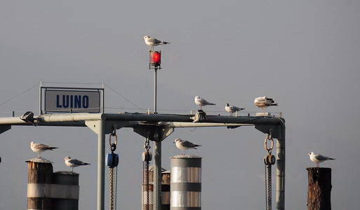 gabbiani al semaforo