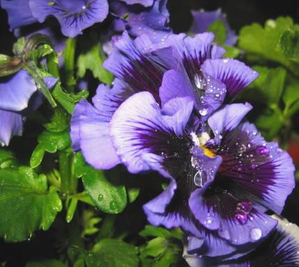 La stagion dei fiori