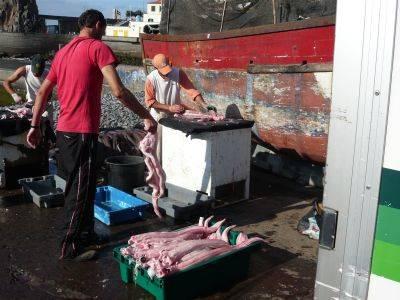 Lavorazione pesce
