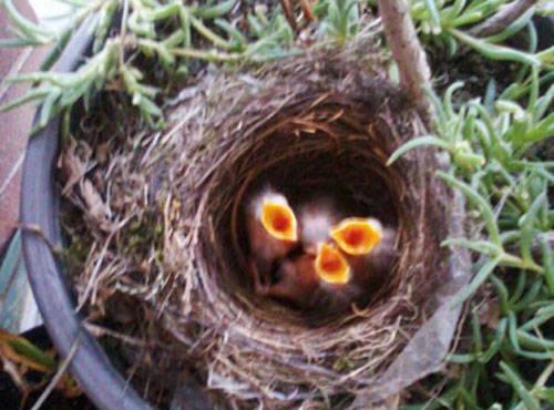 Sono nati!!!