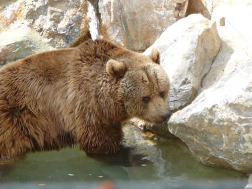 Un orso al parco