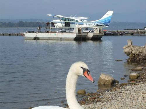 Ali sul lago di varese