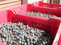 caidate festa dell'uva furmagiada 200