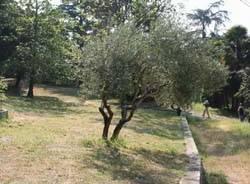 parco morselli terrazze vigneto gavirate