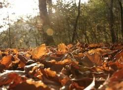 autunno lettori
