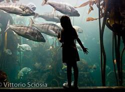 bambini del mondo fotografie associazione neos